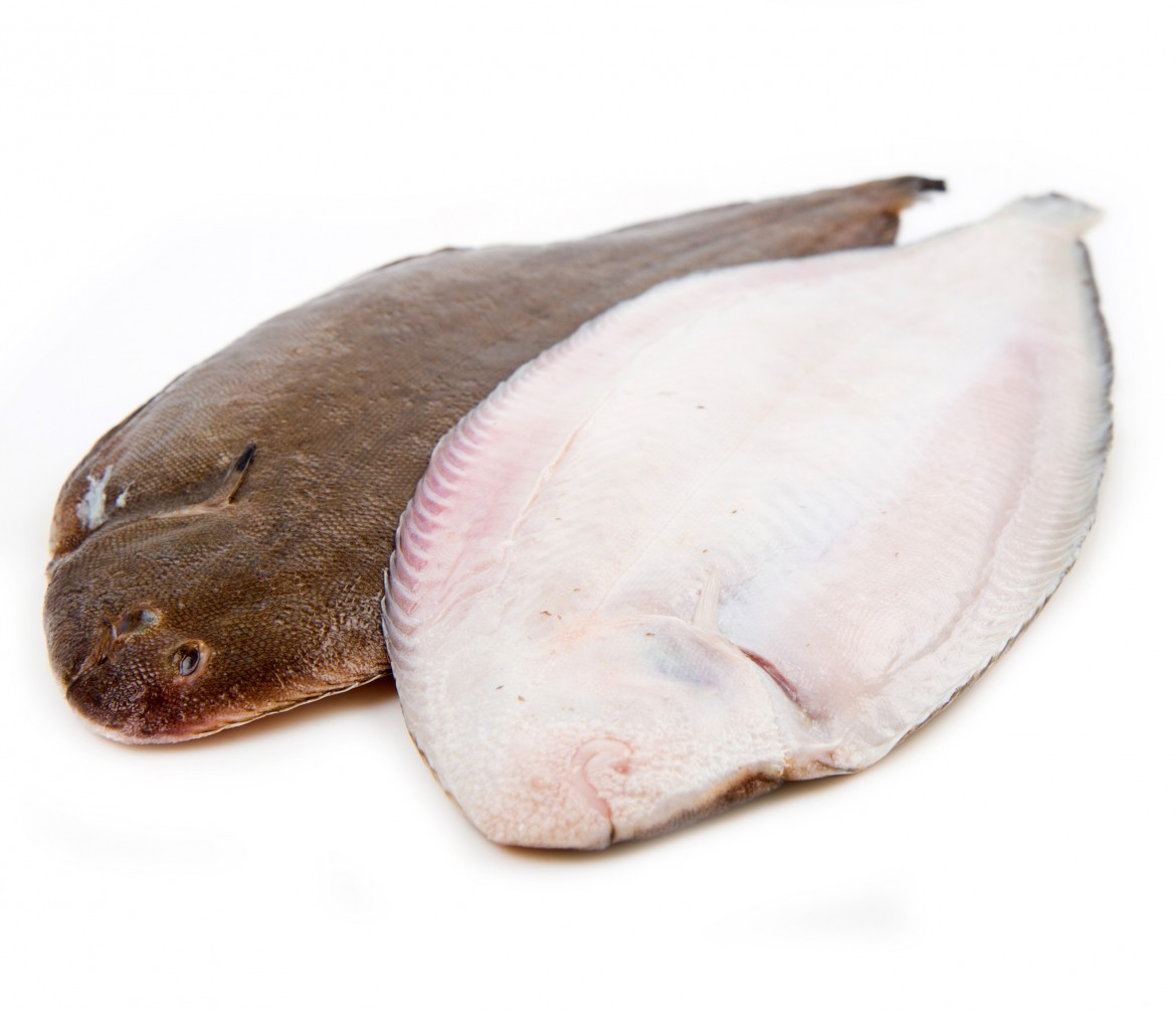 Whole couple fresh sole fish on white background